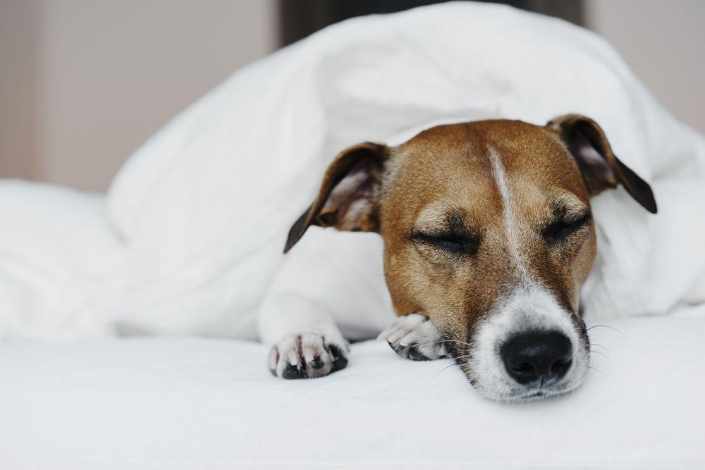 Verboden voor honden - Trouw advies